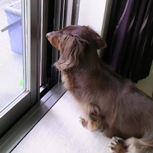 窓際のまる