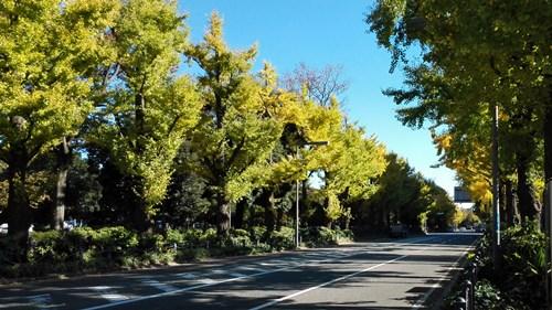 2015山下公園通り