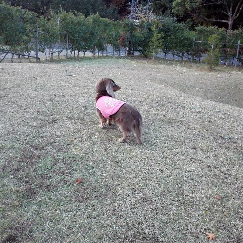 芝生のまる